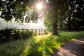 Картинка ограда, трава, деревья, дорога, природа, солнце