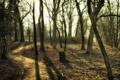 Картинка пейзаж, парк, деревья, дорога, утро