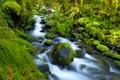 Картинка лес, камни, река, мох, папоротник