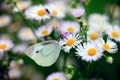 Картинка макро, цветы, бабочка, метелик