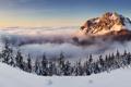 Картинка лес, снег, горы, туман, рассвет, ёлки