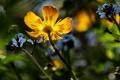Картинка цветы, синие, жёлтые