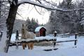 Картинка зима, снег, деревья, лошадь, загон