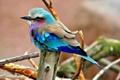 Картинка птица, цвет, перья, клюв, хвост