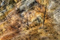 Картинка деревья, горы, скалы, цвет, Вайоминг, США, Йеллоустонский национальный парк