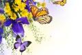 Картинка вода, бабочки, цветы, ирисы, хризантемы