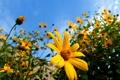 Картинка цветок, небо, макро, цветы, flowers