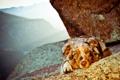 Картинка горы, фон, собака