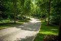 Картинка дорога, зелень, трава, деревья, парк, США, аллея