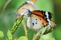 Картинка цветок, макро, бабочка, крылья