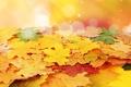 Картинка осень, листья, прожилки