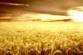 Картинка поле, небо, трава, солнце, природа