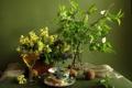 Картинка цветы, стол, фон, ветка, киви, корзинка, ложечка