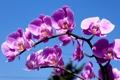 Картинка небо, веточка, сиреневый, орхидея