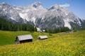 Картинка пейзаж, цветы, горы, природа, красота, Альпы, лужайка