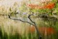 Картинка лес, зимородок, река, птица, осень, ветка