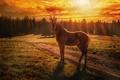 Картинка закат, лошадь, жеребёнок