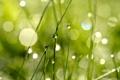 Картинка трава, капли, макро, свет, роса, блики, игра