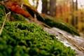 Картинка осень, лес, трава, камни