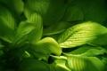 Картинка растения, зеленые, leaves, green, листики