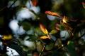 Картинка осень, листья, цвета, макро, размытие, ветка