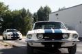 Картинка деревья, полосы, Mustang, Ford, Shelby, GT500, мустанг