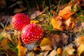 Картинка осень, лес, листья, грибы