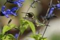 Картинка полевые, птица, цветы, колибри, солнечно