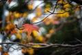 Картинка осень, макро, ветки, лист