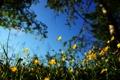 Картинка трава, деревья, цветы, природа, тень