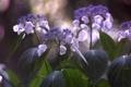 Картинка макро, цветы, растения, боке
