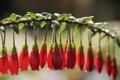 Картинка цветы, ветка, красные