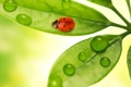 Картинка капли, листья, макро, насекомые