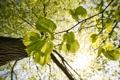 Картинка листья, свет, ветки, макро, Дерево