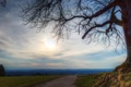 Картинка дорога, поле, солнце, город, дерево, вдали