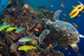 Картинка море, рыбы, океан, черепаха, кораллы, подводный мир, разноцветные