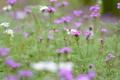 Картинка поле, цветы, растение, луг