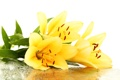 Картинка цветы, капельки, лепестки, тычинки, flowers, листики, leaves