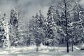 Картинка зима, лес, снег, деревья, обои, ель