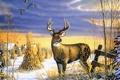 Картинка животные, снег, пасмурно, утки, дома, олень, деревня