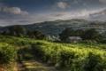 Картинка поле, пейзаж, дом, утро