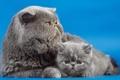 Картинка кошки, дом, фон