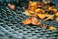 Картинка листья, осень, решетка