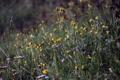 Картинка цветы, лето, утро, роса