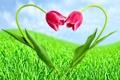 Картинка трава, облака, цветы, тюльпаны