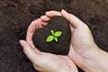 Картинка earth, life, hands, gardening