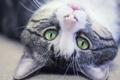 Картинка глаза, макро, котик, котяра