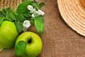 Картинка фрукт, листики, веточки, цветы яблони, зеленые яблоки