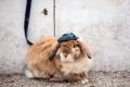 Картинка rabbit, street, sunglas