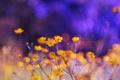 Картинка цвета, цветы, природа, фон, обои, яркие, растения